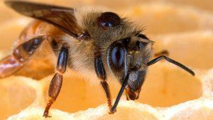 Wat varroa ons leert