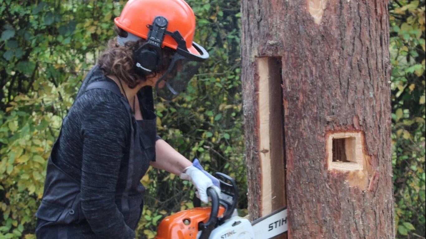 Tree-beekeeping workshop volgens Poolse traditie.