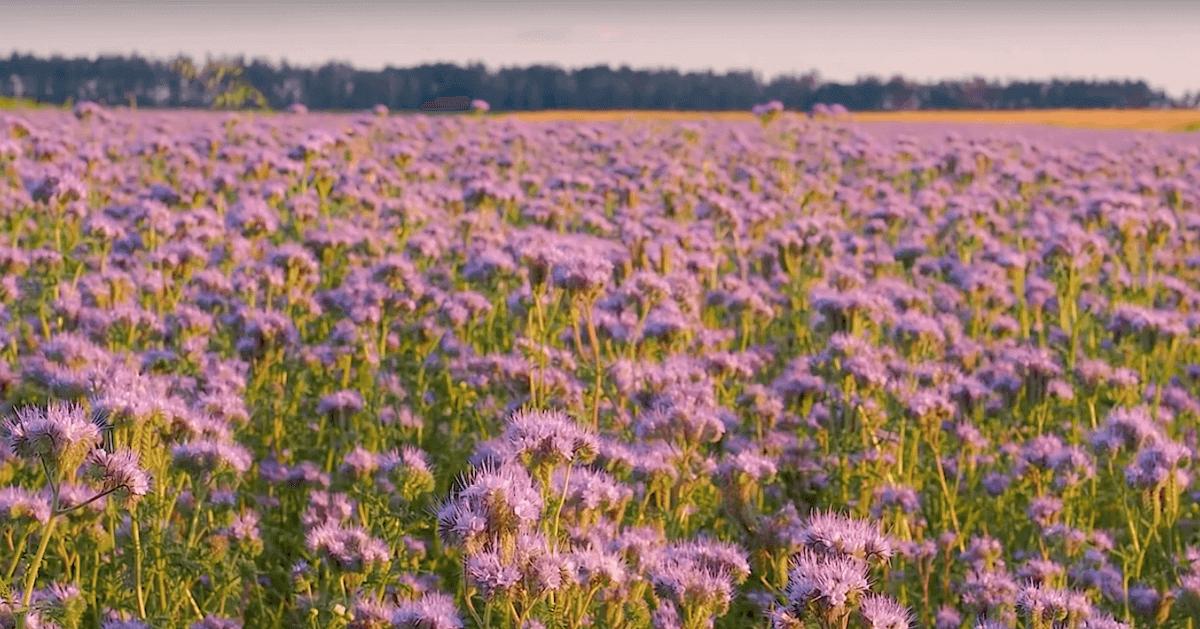 Inspiratiecursus Agro-Ecologie – voorjaar 2020  door Landwijzer