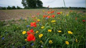Bijen BBBBB: Bio- Boeren- Biodiversiteit- Bloemen en Bloeibogen