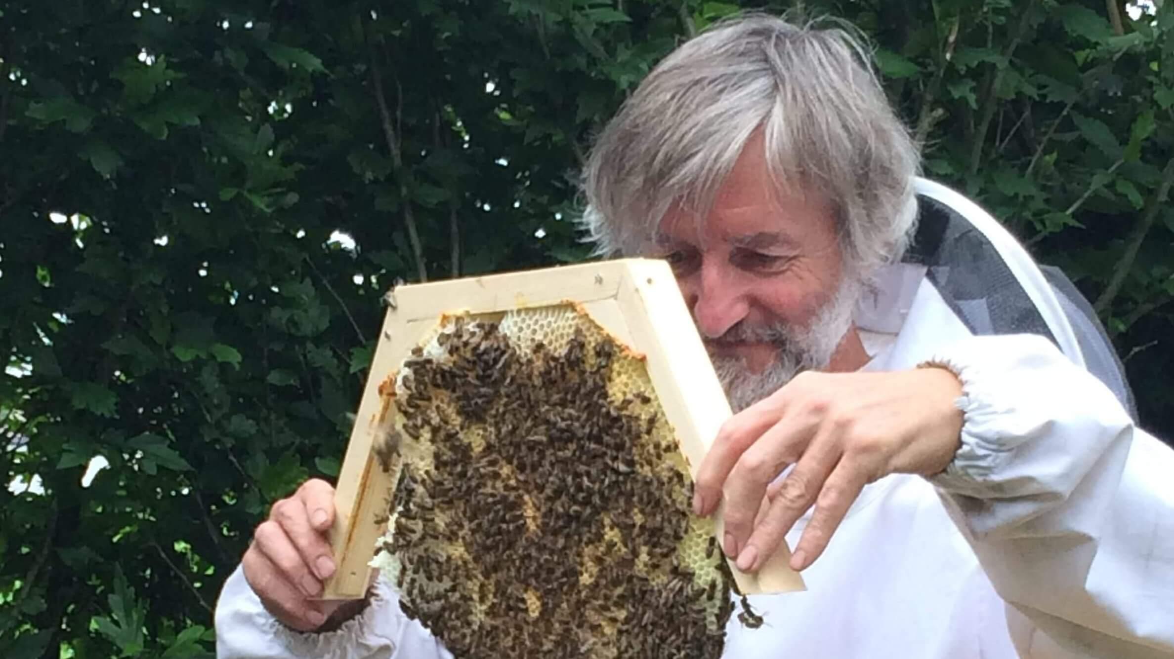 Wat met bijen die sterven?  Bedenkingen door Jef.