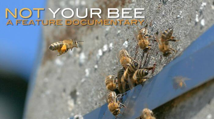 """Steun je de nieuwe (Belgische) bijenfilm: """"NOT YOUR BEE"""" ?"""