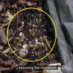 Zwammen ten dienste van honingbijen   –   Myriam Lefebvre