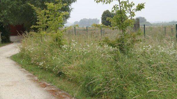 Bermen als sleutel voor biodiversiteit, waterbeheersing, erosiebestrijding en landschapsbeeld.