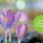 Bestel BIO bloembollen voor 20Mei, geleverd in het najaar door VELT.